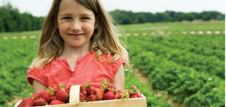 Variedad en la alimentación infantil