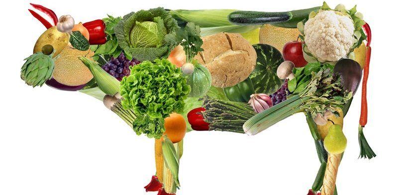 ¿Qué es el vegetarianismo?